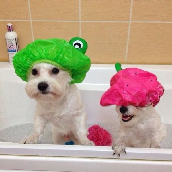 Top 10 Images of Dogs Having a Bath