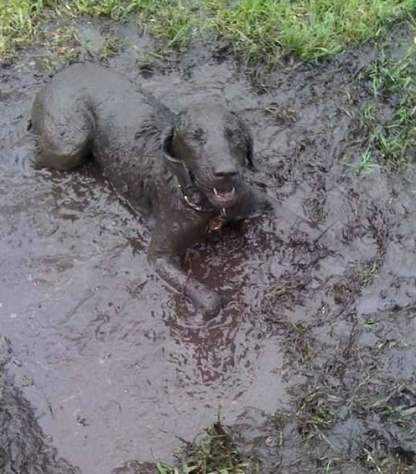 Top 10 Dogs Covered in Mud