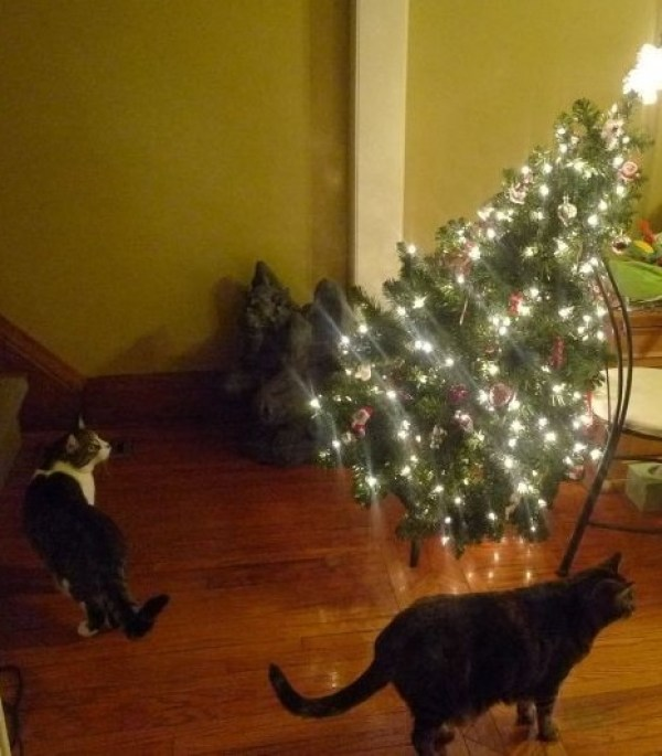 When Do U Take Down A Christmas Tree: Ten Animals Who Think Its Time To Take Down The Christmas Tree