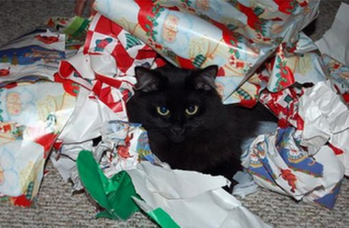 Cat Playing With Christmas Wrapping Paper