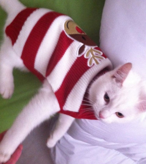 Top 10 Cats Wearing Christmas Jumpers