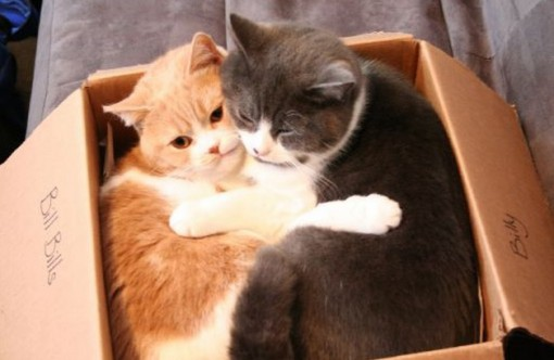 Top 10 Images of 2 Animals in 1 Box