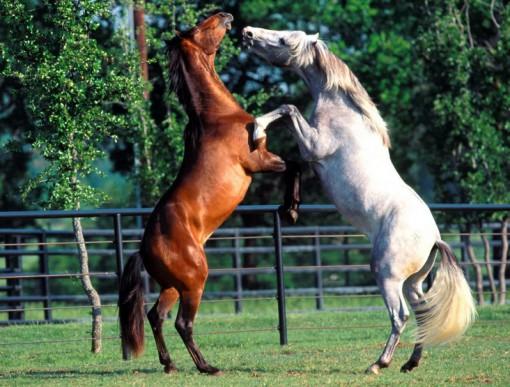 Top 10 Pictures of Animals Slow Dancing