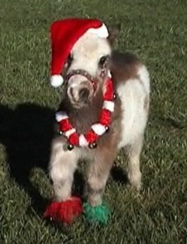 top 10 pictures of christmas horses - Christmas Horses