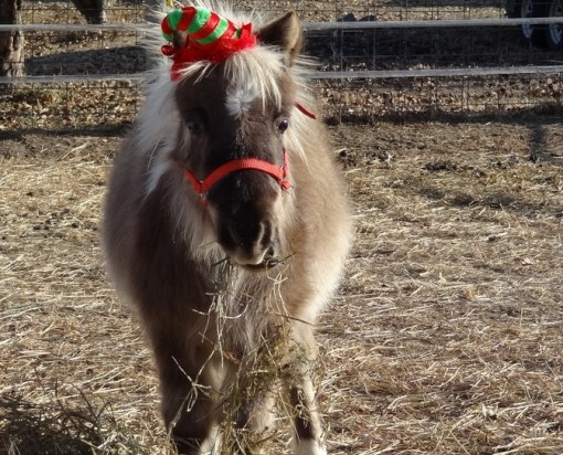 Top 10 Pictures of Christmas Horses