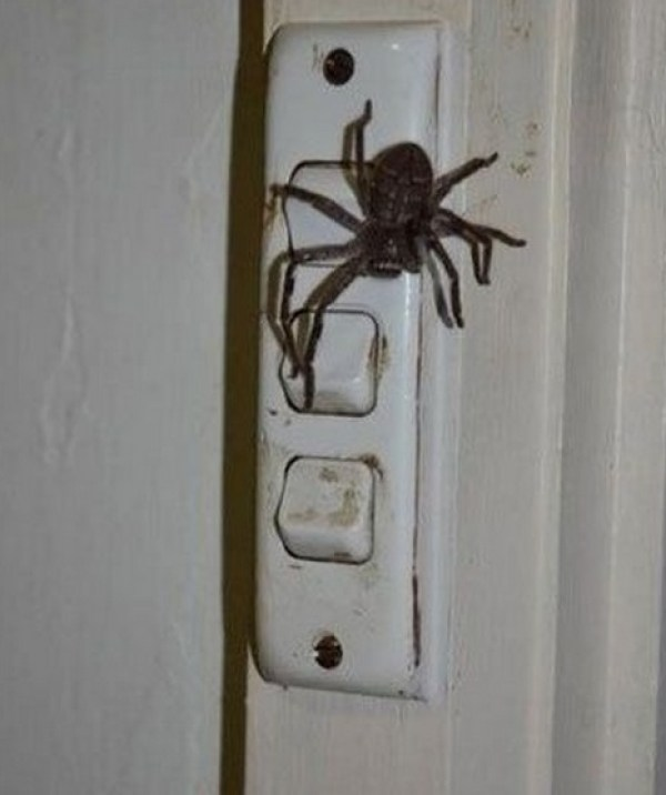 Top 10 Worst Places To Find Spiders