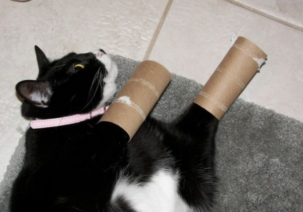 Top 10 Cats With Things on Their Legs