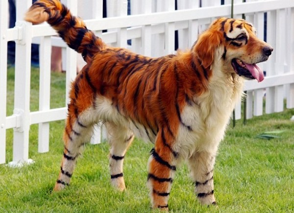 Top 10 Dogs That Look Like Other Animals