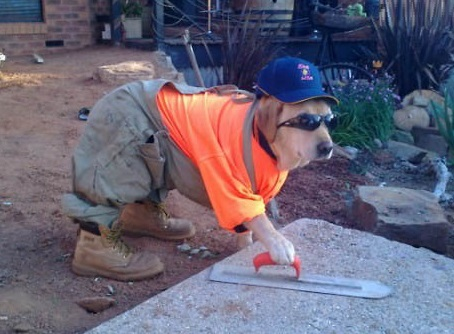 Top 10 Images of Dogs Who Want To Help