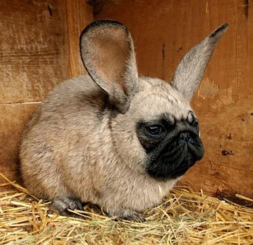 Top 10 Amazing April Fools Rabbits