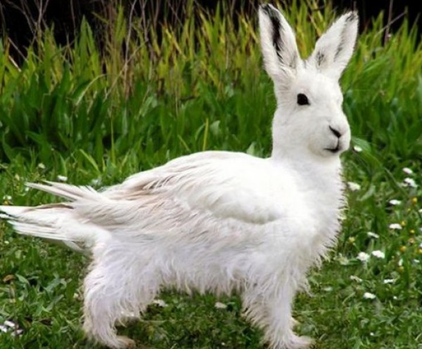 Top 10 Amazing April Fools Rabbits