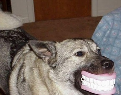 Top 10 Dogs With Funny Things In Their Mouth