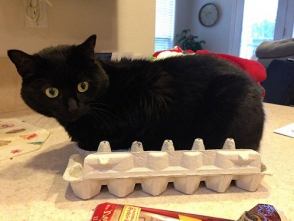 Top 10 Images of Cats In Egg Boxes