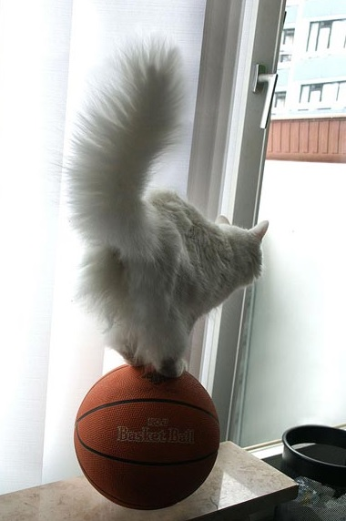 Top 10 Talented Perfectly Balanced Cats