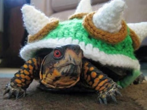Top 10 Animals in Bowser Fancy Dress Costumes
