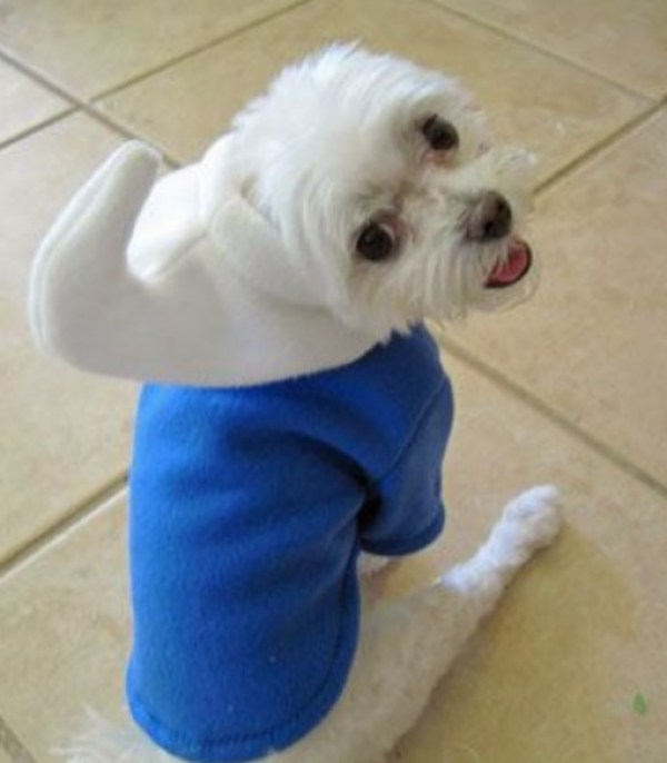 Top 10 Animals in Smurf Costumes and Fancy Dress