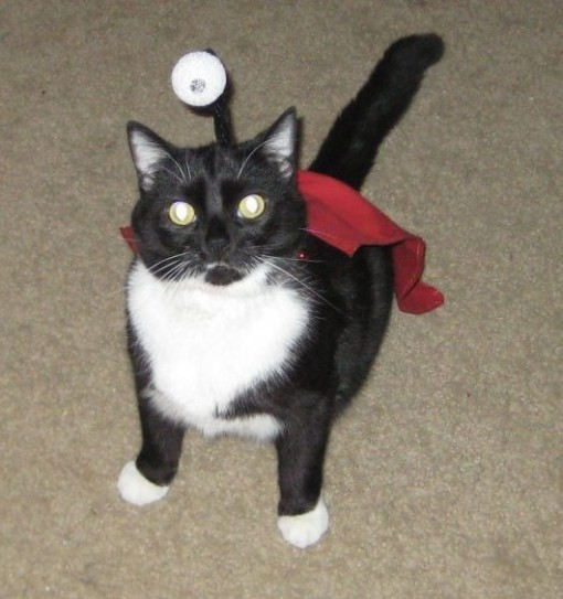 Top 10 Cats Dressed as Cartoon Characters