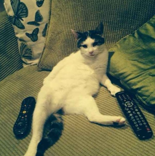 Top 10 Cats Netflix Binge-Watching (Couch Potato Cats)