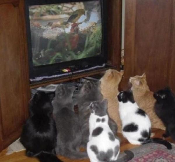 Top 10 Cats Netflix Binge-Watching (Couch Potato Cats)