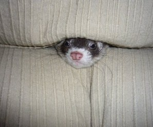 Top 10 Helpless Animals Swallowed by Sofas