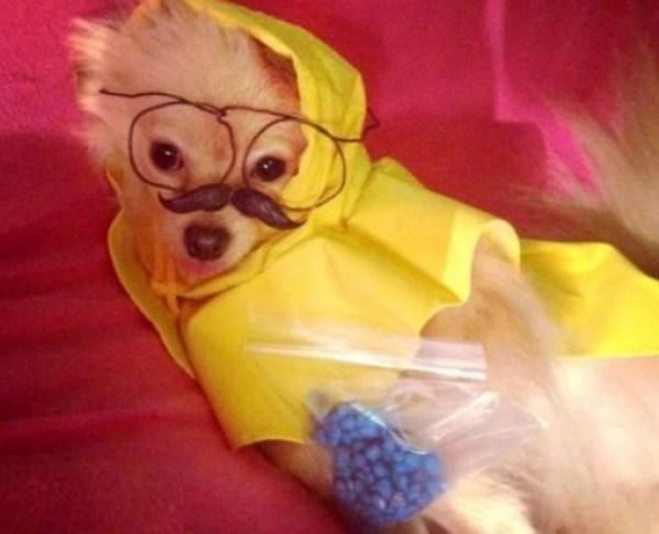 Top 10 Animals in Breaking Bad Costumes