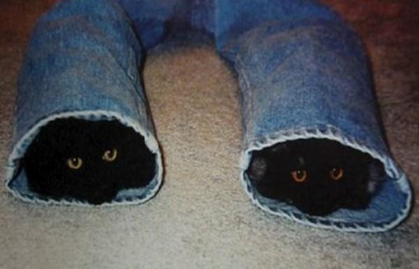 Top 10 Fashionable Cats Wearing Denim