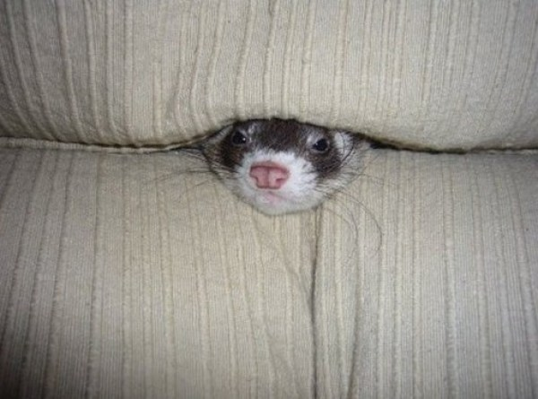 Ten Funny but Helpless Animals Being Swallowed by Sofas