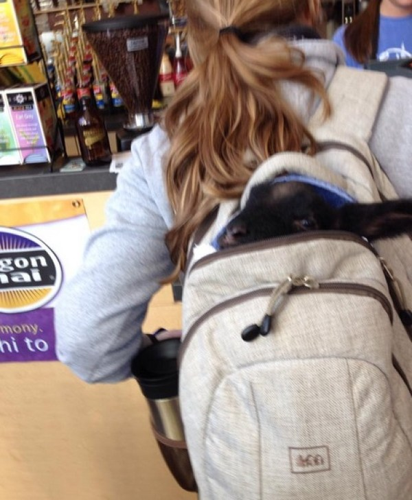 Top 10 Images of Pets in Backpacks