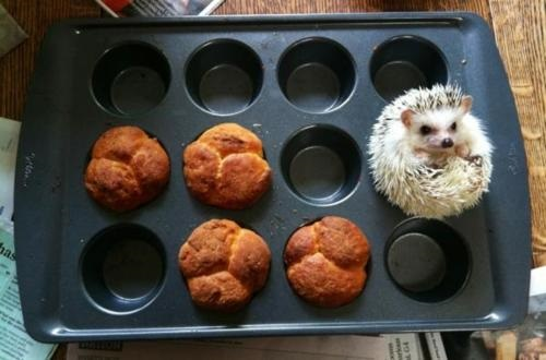 Top 10 Ninja Animals Hiding in Food