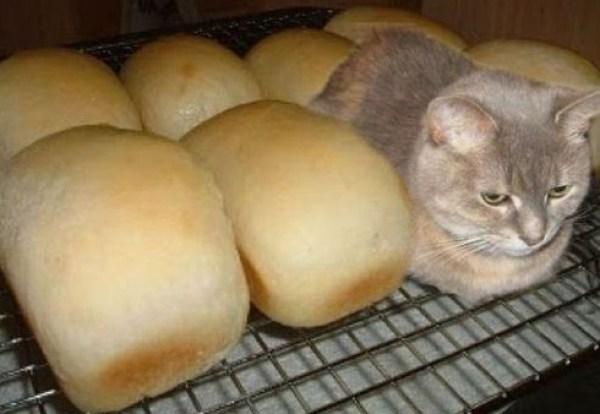 Top 10 Ninja Animals Hiding in Food