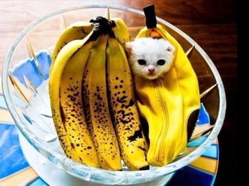 Cat Hiding in Food