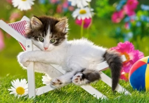 Top 10 Summer Cats Relaxing In Deckchairs