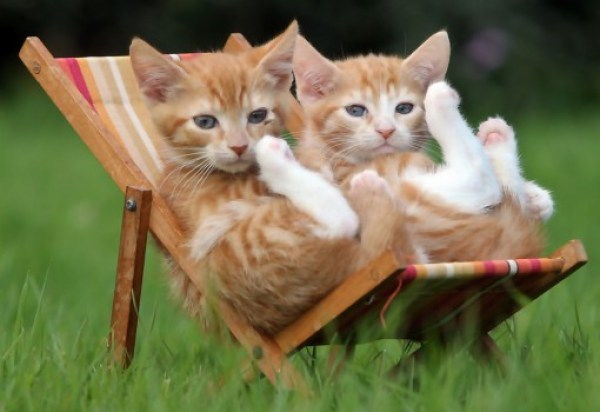 Top 10 Summer Cats Relaxing In Deckchairs