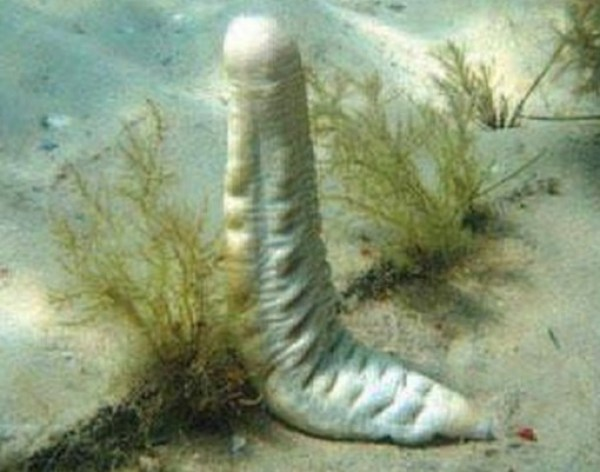 Top 10 Weird and Unusual Sea Cucumbers