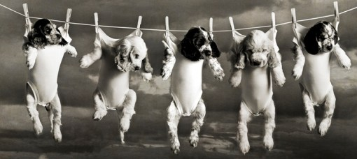 Top 10 Adorable Dogs on Washing Lines