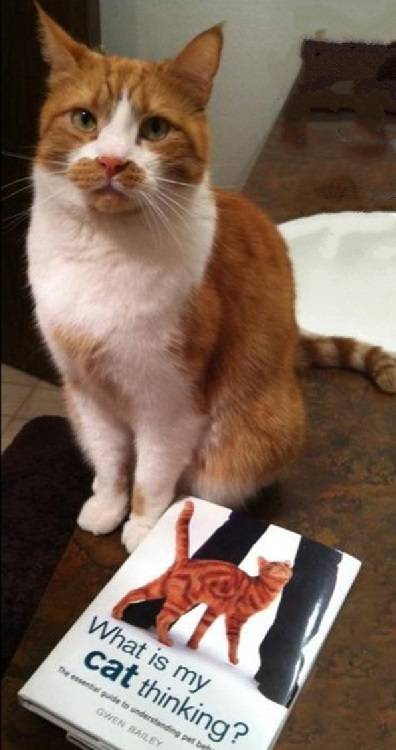 cat evolution clicker game