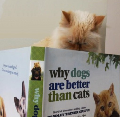 Top 10 Cats Reading Books About Cats