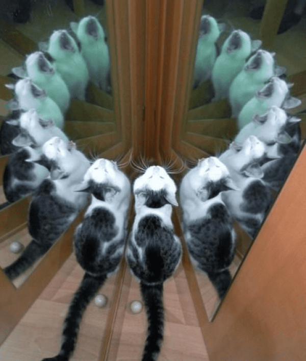 Top 10 Reflective Cats in Reflections