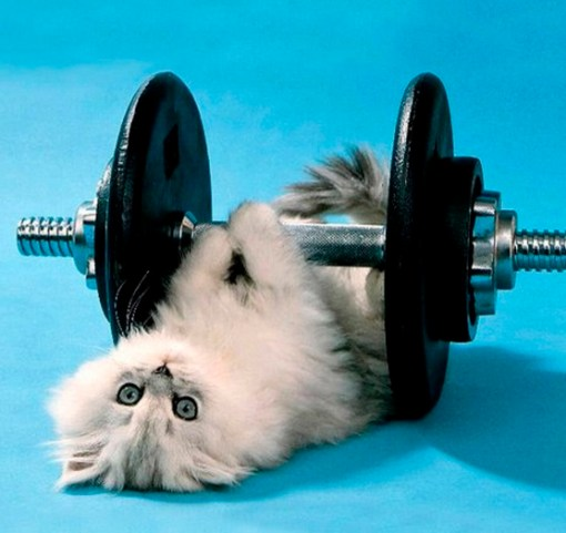 Top 10 Super Fit Weightlifting Animals