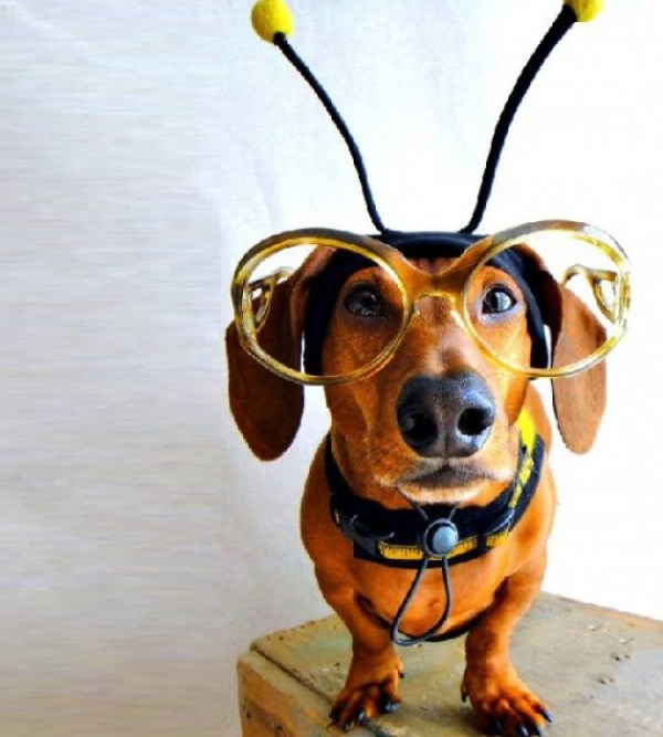 Ten Funny Animals Dressed as Bees Who Are Simply Bee-utiful