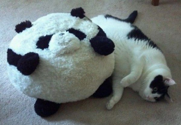 Top 10 Cats That Look Like Inanimate Objects