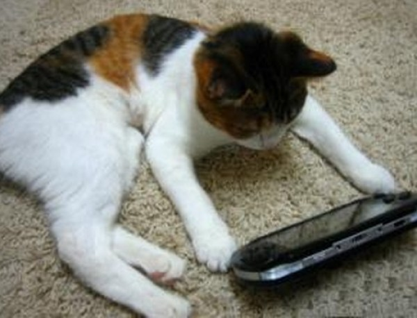 Top 10 Nerdy Sony PlayStation Cats