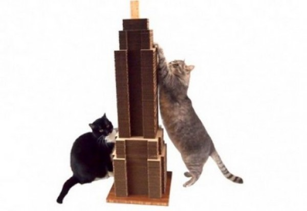 Cat Scratching Empire State Building