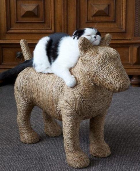 Cat Scratching Dog