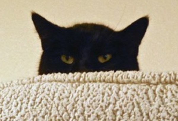 Top 10 Suspicious Cats That Know What You Are Up To