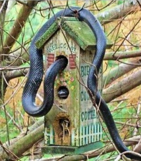 Top 10 Unusual Animals Inside Bird Houses