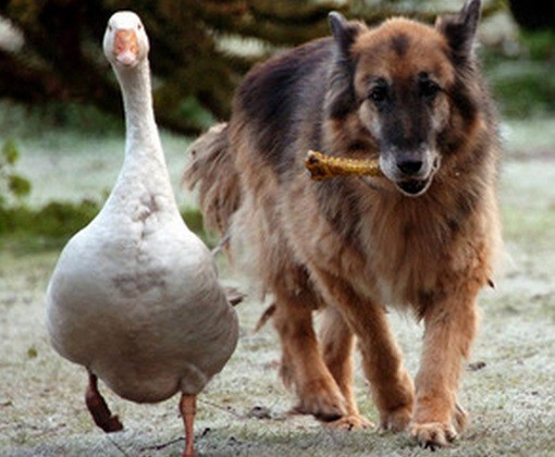 Top 10 Unusual Dog Friendships
