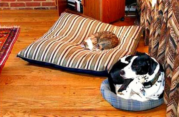 Top 10 Funny Animal Bed Swaps