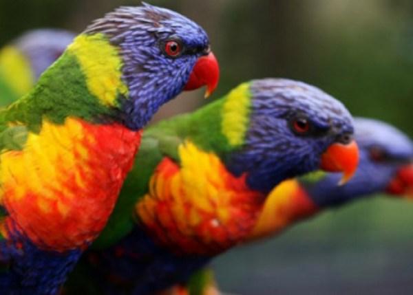 Ten Amazing Naturally Rainbow Coloured Animals