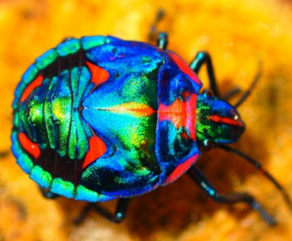 Ten Amazing Naturally Rainbow Coloured Animals